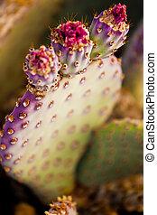 flowering, kaktus, do góry szczelnie