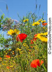 flowering meadow, Gran Canaria, late spring