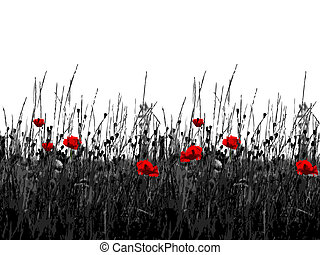 Flowering of the poppies - Blackly white background with the...