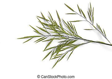 Flowering panicle weed - Flowering panicle green weed on a...