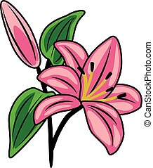 Flowering pink lily. Vector illustration