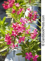 Flowering plant.