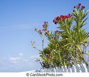 Flowering plants.