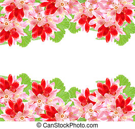 Flowering red Currant (Ribes sanguineum), on white background with room for text
