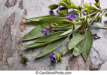 Flowering Sage - Flowering sage, against slate background.