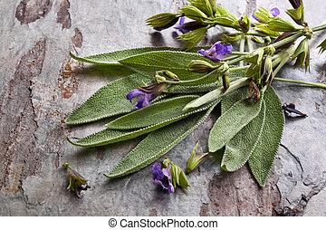 Flowering Sage - Flowering sage, against slate background.