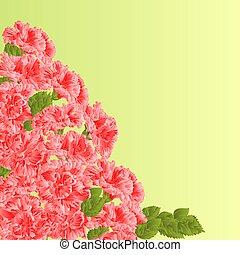 Flowering shrub pink hibiscus vector.eps