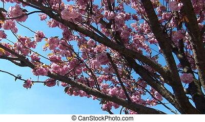 flowering tree a