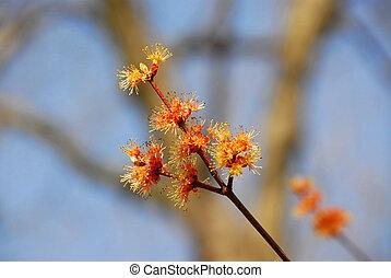 Flowering tree branch on blue sky background