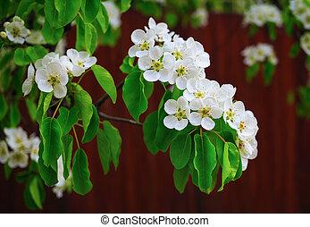 Flowering tree closeup