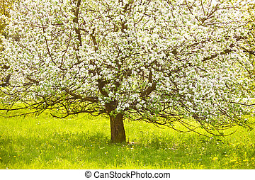 Flowering tree in a meadow, sunny day, springtime