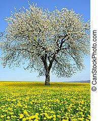 Flowering tree on dandelion field. Spring season.