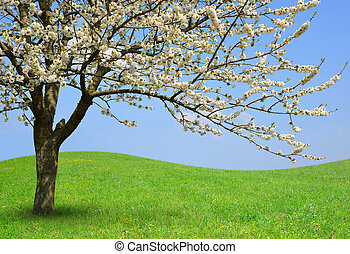 Flowering tree on meadow. Spring season.