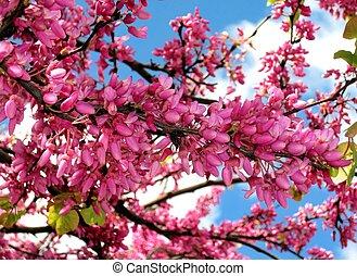 flowering tree - snapshot of a flowering tree in northern...