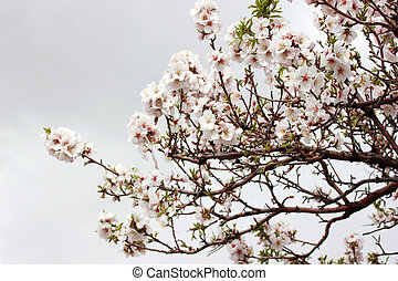 Flowering tree spring