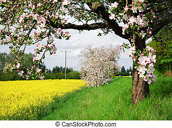 Flowering tree - Spring scenic whith a flowering tree in ...