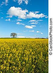 Meadows of Tuscany