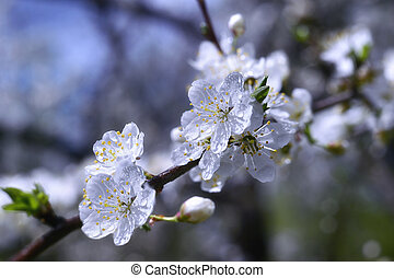 Flowering trees in spring garden on a sunny day