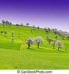 Flowering Trees in Switzerland - Flowering Trees Surrounded...
