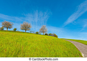 Flowering Trees Surrounded by Sloping Meadows, Switzerland