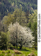 Flowering trees in the background of mountains