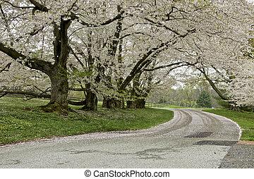 Flowering Trees - A row of flowering trees
