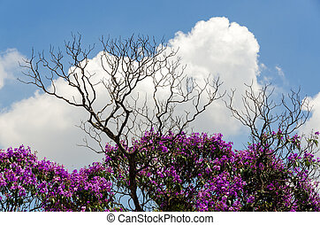 flowering trees and deadwood in Brasile