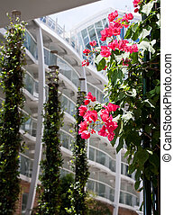 Flowering Vine with Balconies in Background