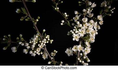 Flowering white flowers