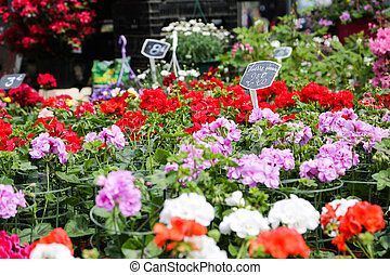 Flowermarket Lille France - Flowers from the flower shop at ...