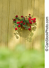 flowerpot with flowers on old wooden barn wall