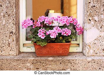 Flowerpot with geranium on window