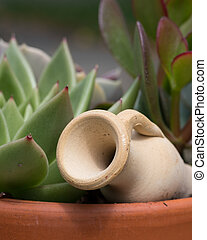 Flowerpot with succulent plants and a small amphora