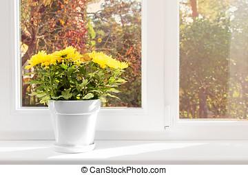 flowerpot with yellow chrysanthemum on window sill