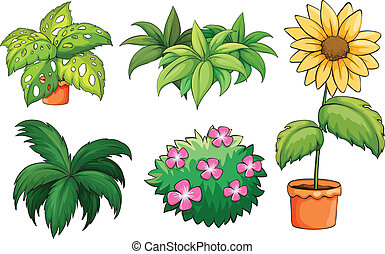 Flowerpots and plants - Illustration of flowerpots and...