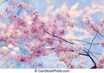 flowers., סאקארה