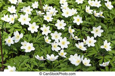 flowers., 春, 白