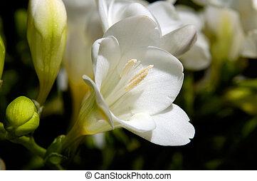 Flowers 82