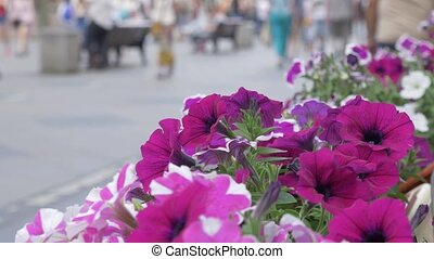 Flowers adorn the streets of the city, close-up. In the background, a crowd of people is not in focus. An abstract background for any video.