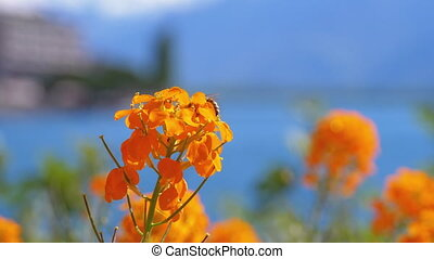 Flowers against Alpine Mountains and Lake Geneva on...