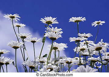 Flowers Against Blue Sky