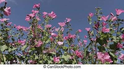 flowers against the blue sky