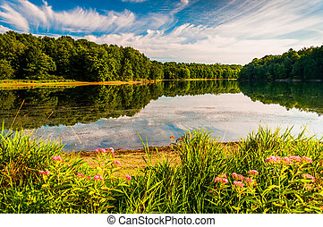 Flowers along the shore of Lake Marburg in Codorus State...