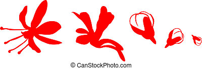 Flowers in different stages of disclosing on a white background