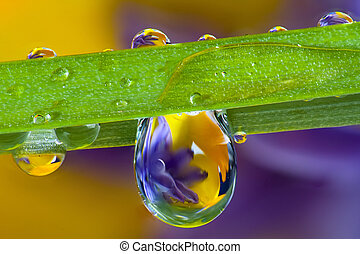 Flowers and droplets - Wild flowers refracted through water ...