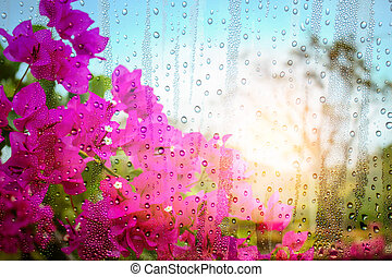 Bougainvillea flowers and drops of water on glass in winter.