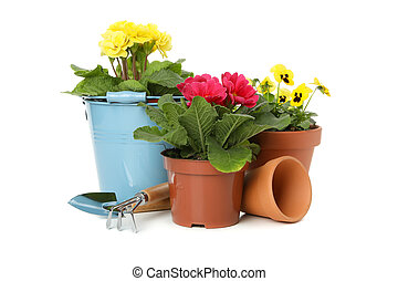 Flowers and gardening tools isolated on white background