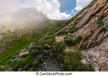 flowers and grass on rocky cliffs in fog. beautiful nature...