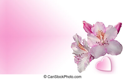 Two flowers and heart on pink background. Good for cards.