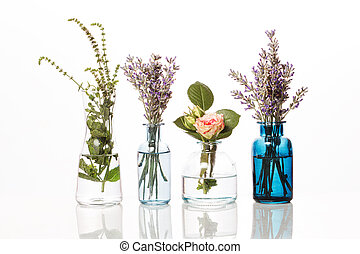 Flowers and herbs in glass bottles. Abstract flower bouquets in bottles isolated on white